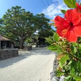 竹富島観光ハイビスカス